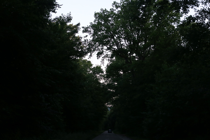 forest on summer evening