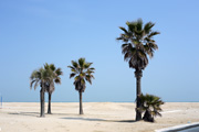 rimini beach palms small